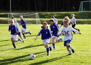 Om man tänker efter: Hur mycket glädje och måljubel och lycka och munterhet skapas nästan varje kväll genom ÖP-liret i det här länet? Det måste vara åtskilligt. Så här såg det ut klockan 19.47 på Hovängen i Ås på torsdagskvällen. Ås stars har precis gjort mål.Matchen präglades av trevligt och fantasirikt spel med många målchanser och bra prestationer. Länets unga fotbollsspelare utvecklas åt rätt håll.