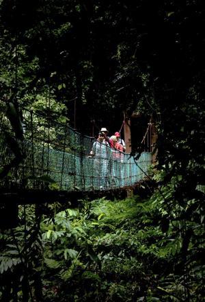 En av höjdpunkterna vid besöket i Danum Valley är att vandra på det system av hängbroar som går genom regnskogen.