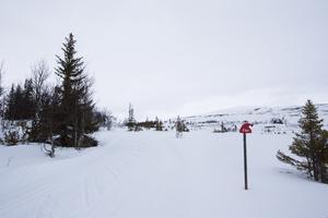 Sapporospåret slingrar sig upp och ner i fjällbjörkskogen på Ottfjället.