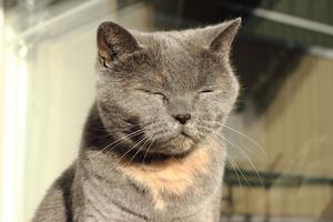 Min goa mysiga katt Chanel lapar morgonsol på balkongen.