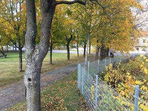 Rådhusparken i Hudiksvall.