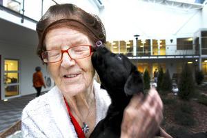ETTABILD   Rubrik: Kärleksfulla möten på Nyviksvägen   Puff: Ainy Natanaelsson älskar både hundar och katter, och fick uppleva sin roligaste dag på Nyviksvägen när fem labradorvalpar hälsade på i Vinterträdgården. ÖP har hälsat på det nya äldreboendet i Hammarstrand.