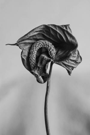 En bild är inte så bara. Fotokonst av Jostein Skeidsvoll.