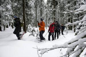 Snöskovandring är ett fantastiskt sätt att ta sig fram i gammelskogen, som här i Skuleskogens nationalpark.