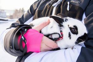 Pricken är Odensalas spralligaste och äventyrligaste kanin. Han överlevde fem dagar i 20 graders kyla och bland snokande rävar.