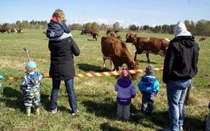 Mpnga barn fick veta varifrån vår mjölk kommer.FOTO: HANS BLOOM