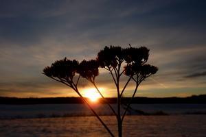 Solnedgång i Livsdal