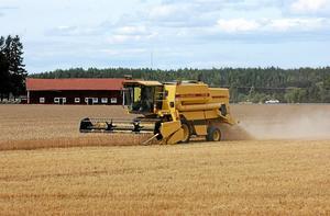 Skördetröska i arbete. I dag importerar vi 45-50 procent av vår livsmedelskonsumtion, skriver Pia-Maria Johansson.