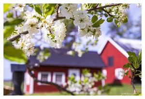 Vackert med alla blommor som är på väg, här är sommarens frukt på G