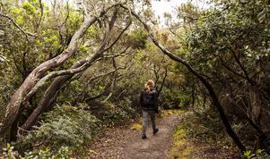 En stig genom den täta vegetationen på ön Port-Cros, som är en nationalpark både ovan och under vattenytan.   Foto: Johan Öberg