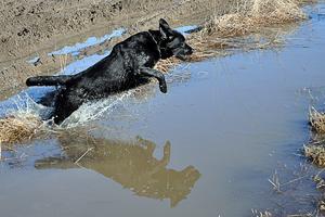 En glad hund som gillar att bada.