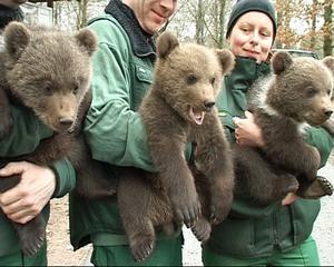 Många björnungar riskerar avlivning.