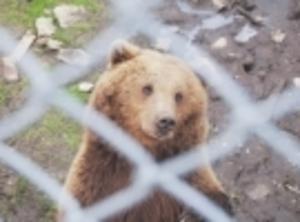 De hägnade björnarna tigger mat och ser väldigt snälla ut. Men för många hundar är de en skrämmande upplevelse.