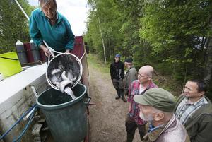 Roland Olsson håvar upp regnbågslax ur fiskbilen till en plastbytta för transport till sjön.