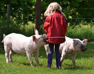 Åkte till Åsby minizoo med barnen och gick in i grisarnas hage. Grisar är inte bara söta de är busiga också. En av grisarna drog i Leahs jacka. Den ville leka. Jag sa till den att låta bli och den släppte direkt.
