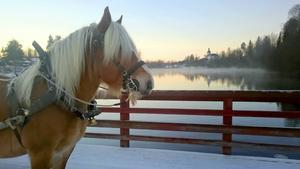 Calle på flottbron i Gagnef en kylig vinterdag.
