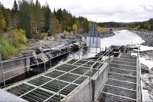Genom att förmå öringungarna att vandra uppför fisketrappan i stället för in i kraftverket, så kan kanske beståndet av Bågedeöring återskapas.