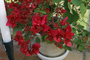 Många av växterna är minnen från vänner och anhöriga, berättar Carina.