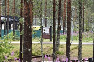 Ambulansen skymtas inne  platsen där björnattacken genomfördes.