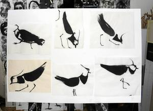 Tofsvipans rörelsemönster fångad i sex teckningar.