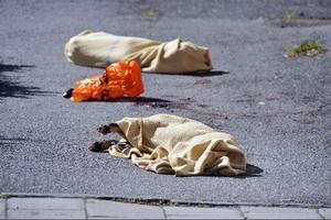 De två hundarna avlivades av polisen efter att ha skadat tre människor. Anmälningar om attackerande hundar har ökat på senare år.  I Danmark förbjöds nyligen ett tiotal hundraser. Därefter har röster höjts för att Sverige borde införa ett liknande förbud. Foto:scanpix