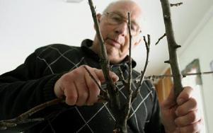 Folke Drugge, trädgårdsingenjör, är kritisk mot att allt färre villaägare beskär sina fruktträd. Därför har fruktträdskräftan kunnat sprida sig, hävdar han.Foto: KLARA GRÖNDAHL