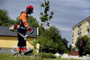 viktigt. Att sommarjobba är ett viktigt steg på vägen till ett yrkesliv, poängterar Centerpartiet. Foto: Pontus Lundahl /Scanpix