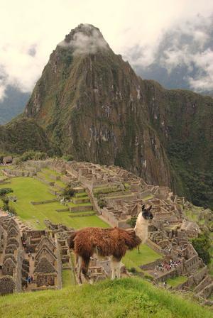 Machu Picchu med lama i förgrunden: Två fina representanter för Sydamerika!