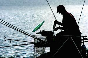 Borlänge centrala fiskevårdsområde har låtit undersöka fisk i Bysjön.