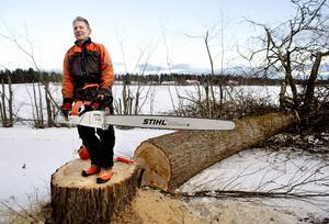 Stig Svedin har precis fällt ett av jätteträden med sin specialsåg.