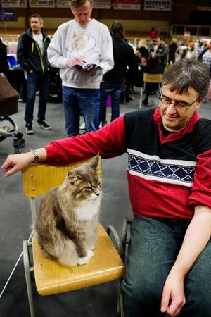 Den här katten kommer från uppfödaren Liana Gilhus och uppfyllde alla krav som domaren ställde på en katt. Därför gick han vidare till final.