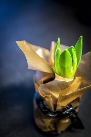 En enkel gå-bort-present skapar du med hjälp av en hyacint, vaxat papper och ett snöre.