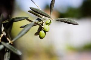 En liten oliv till drinken, kanske?