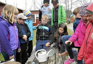 Flyter legobiten? Barnen i klas 2A Asken testade om olika grejer flöt i söt- och saltvatten.