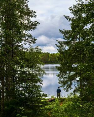Tom Olofsson passar på att fiska efter abborre i Gamfäbodtjärn, Lögdö vildmark.