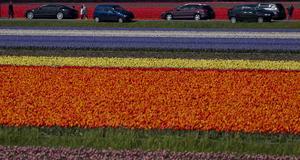Turister stannar för att kolla på Hollands stolthet.