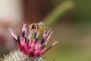Spännande små insekter som är kul att fotografera.