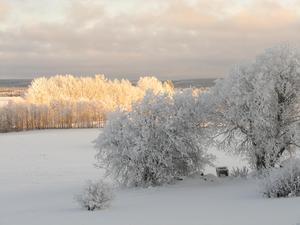 En vacker vinterdag i Fjäl med massor av rimfrost i träden.Foto: Maria Iller Andersson