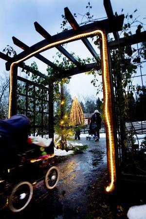 LJUS. Ända sedan parken stängde i höstas har personalen jobbat med att sätta upp de 850 000 ljuspunkterna.