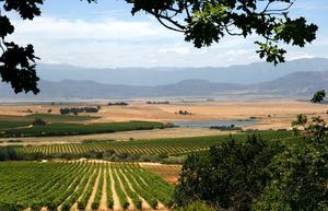 Populärt vinland. Sydafrika fortsätter att vara svenskarnas favoritvinland, även om försäljningen på Systemet totalt minskade marginellt det första halvåret.