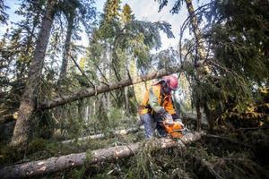 Stormen påverkar förstås ekonomin för de mindre skogsägarna. Stormfällda träd ger inte lika mycket betalt och avverkningskostnaderna är högre.