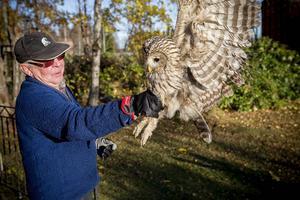 Slagugglan Ulla är nu på bättringsvägen tack vare ornitologen Leif Johansson i Härnösand.