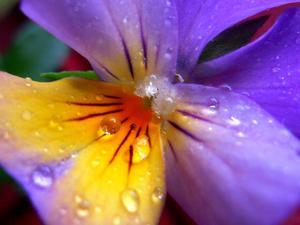 Pensé i trädgården efter regn.