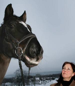 LIVET. Hästar är livet för Carina Gustavsson och hennes familj. Genom åren har de byggt ut sin verksamhet mer och mer. Nu har de  25 hästar på gården och snart även ett eget ridhus hemma i Berg. Här med hästen List som tävlar i dressyr.