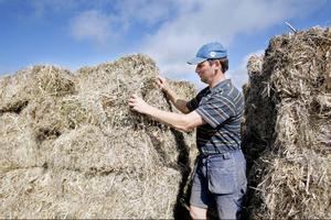 Per Jonsson testade att odla hampa för att han behövde odla något annat på den mark han odlar korn. Hampan tar också död på ogräs så han tyckte det var en bra gröda att prova.