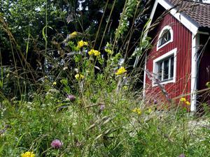 Vilka möjligheter finns i sommarstugan? Foto Hasse Holmberg / TT