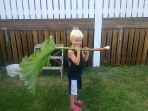 Nu är vi hos farmor o farfar, bilden föreställer  barnbarnet Zackarias 4 1/2 år, han var så stolt med rabarbern på ryggen