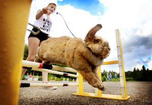 Elin Löjdström, 13, tävlade med kaninen Selma, som för det mesta hoppade självmant och gjorde mycket bra ifrån sig.