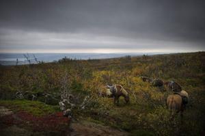 Hästarna äter och vilar samtidigt som ryttarna gör det.