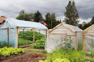Koloniträdgården har funnits i fyra år, men växthusen är nya för i år.